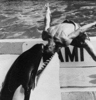 killer-whale-kills